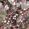 もう春は来た。